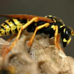 Der richtige Umgang mit Wespen